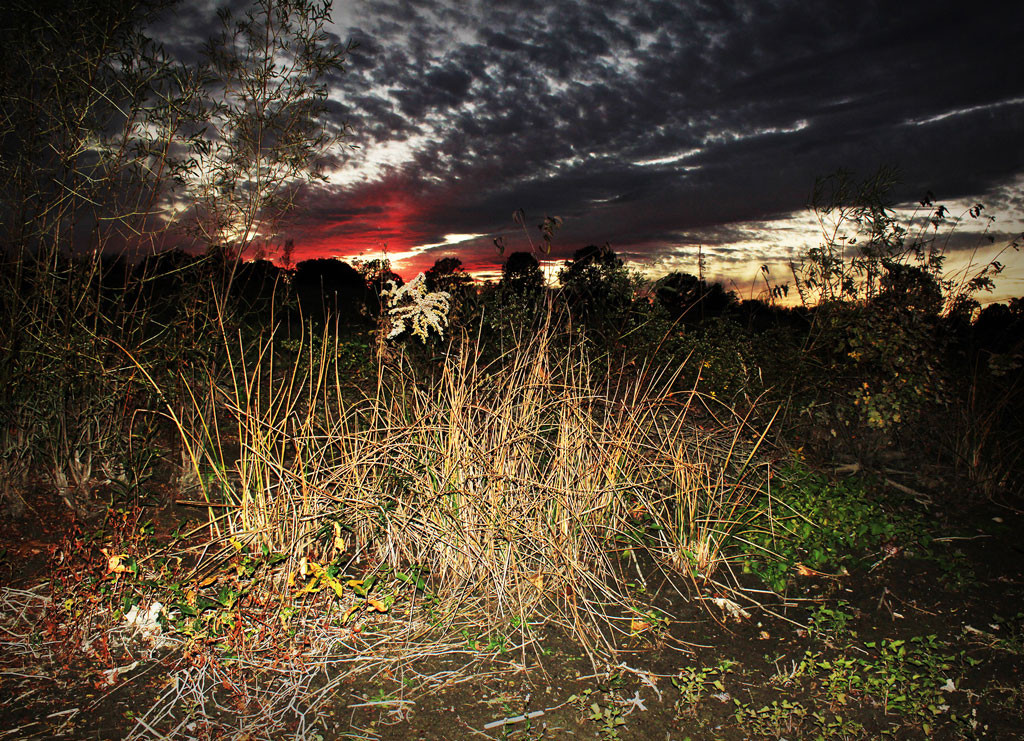 Sunset Over Dry Reeds